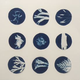 'Field Trip'. Cyanotype on Garza © Jonathan Brennan 2020